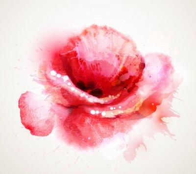 Vinilo La amapola roja floración