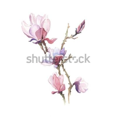 Vinilo La flor de acuarela magnolia primavera aislada sobre fondo blanco