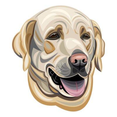 Vinilo Labrador