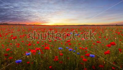 Vinilo Landscape with poppies in Jutland, Denmark at sunset