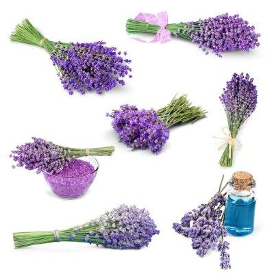 Vinilo Lavanda, flor, Color lavanda.