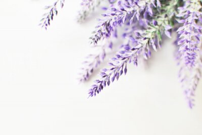 Vinilo Lavender branch on a white background