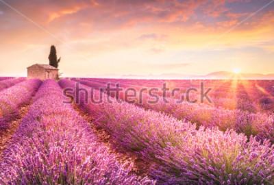 Vinilo Lavender fields at sunrise near Valensole, Provence, France