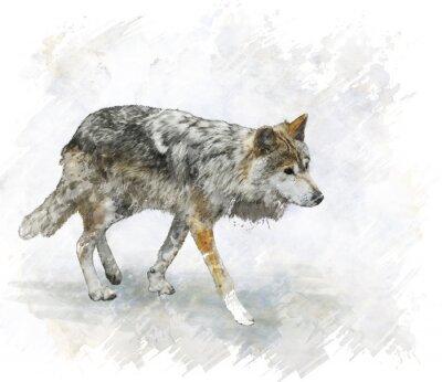 Vinilo Lobo de la acuarela