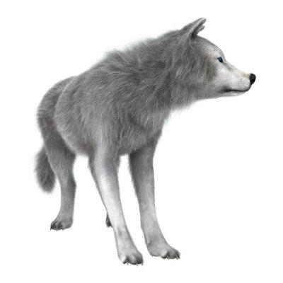 Vinilo Lobo Polar en Blanco