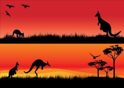 Vinilo Los canguros de Australia en la puesta de sol