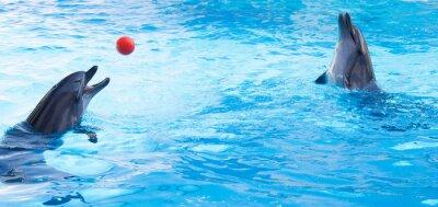 Vinilo Los delfines juegan bolas