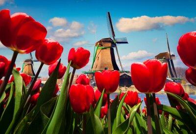 Vinilo Los famosos molinos de viento holandeses