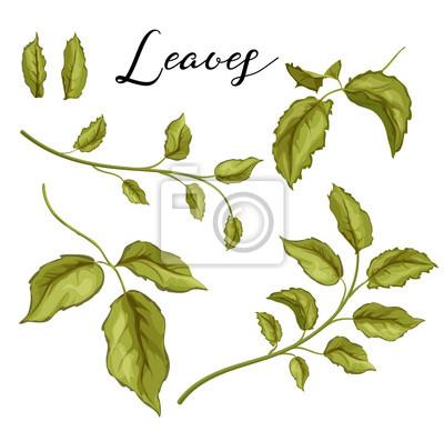 Vinilo Mano de vector dibujado hojas color de rosa en conjunto de rama