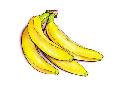 Vinilo Manojo de plátanos aislados sobre fondo blanco. Ilustración de la acuarela. fruta tropical