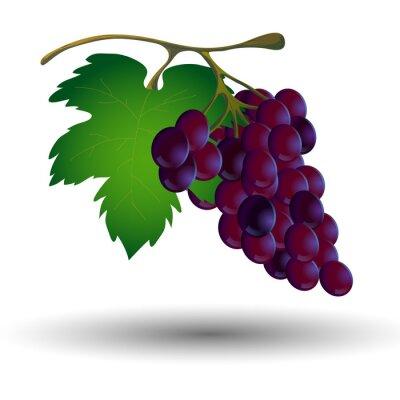Vinilo Manojo de uvas con una hoja sobre un fondo blanco