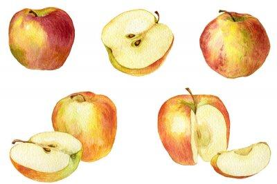 Vinilo Manzana dibujo de la acuarela