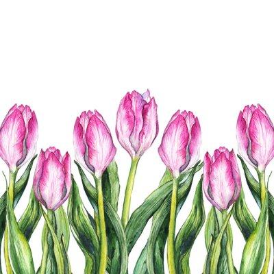 Vinilo Marco de la frontera de la naturaleza de la flor del tulipán de la acuarela