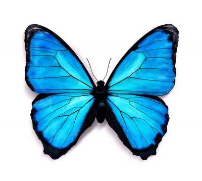 Vinilo Mariposa azul