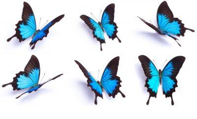 Vinilo Mariposa azul y colorido en el fondo blanco
