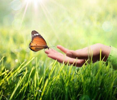 Vinilo mariposa en la mano en el césped