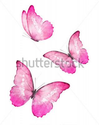 Vinilo Mariposas de acuarela de tres colores, flores sobre fondo blanco
