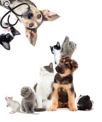 Vinilo Mascotas buscan