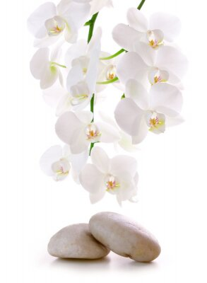 Vinilo Massage Stones with Orchid.