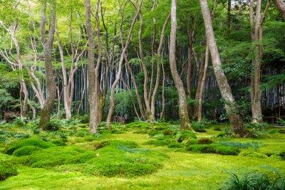Vinilo Moss jardín vista en Arashiyama, Kyoto