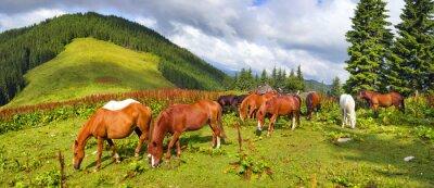 Vinilo Mustangs de los Cárpatos en Gorgany