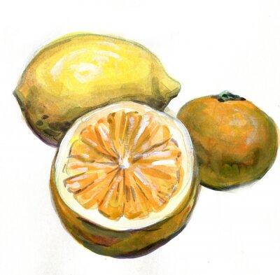 Vinilo Naranja, limón, mandarina. Frutas cítricas. Pintura de acuarela