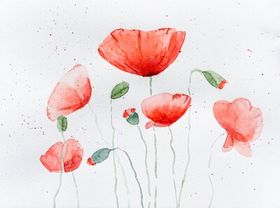 Vinilo Natural drawing of poppy flowers