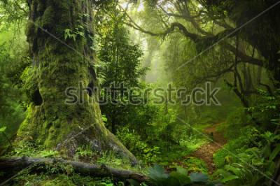 Vinilo Nepal jungle
