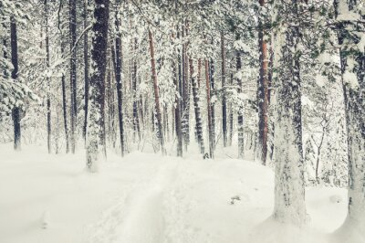 Vinilo Nevadas en el bosque de invierno.