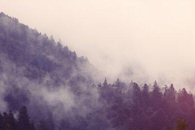 Vinilo Niebla en el bosque