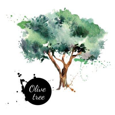 Vinilo Oliva ilustración del vector del árbol. Mano acuarela dibujada