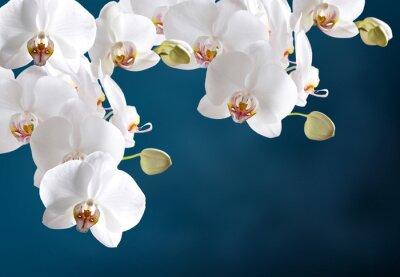 Vinilo Orquídea blanca