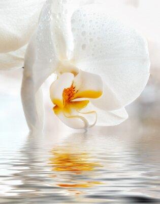 Vinilo Orquídea Blanca. Primer plano con la reflexión en el agua.