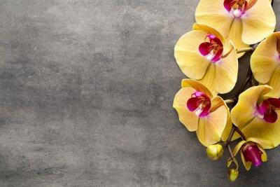 Vinilo Orquídea rosada hermosa en un fondo gris.