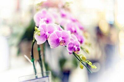 Vinilo Orquídeas