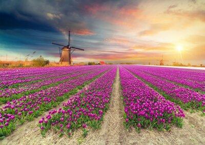 Vinilo Paisaje con tulipanes, molinos de viento holandeses tradicionales y casas cerca del canal en Zaanse Schans, Países Bajos, Europa
