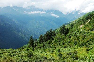 Vinilo Paisaje de bosque de montaña y valle