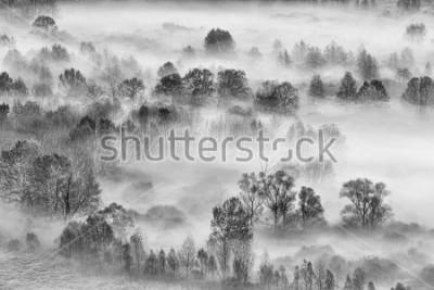 Vinilo Paisaje en blanco y negro, el bosque de niebla, Italia