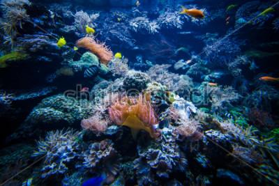 Vinilo Paisaje submarino de arrecifes de coral con peces de colores