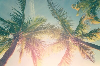 Vinilo Paisaje tropical con palmeras y cielo soleado