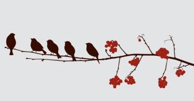 Vinilo Pájaros en la rama de Rowan