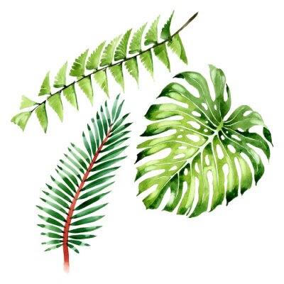Vinilo Palm beach tree leaves jungle botanical. Watercolor background illustration set. Isolated leaf illustration element.