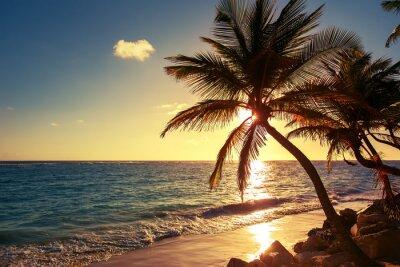 Vinilo Palmera en la playa tropical