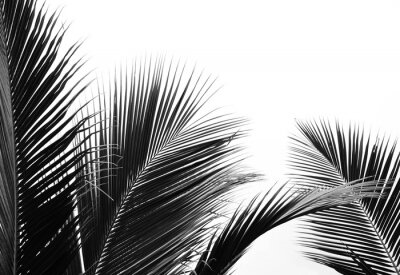 Vinilo palms leaf on white background