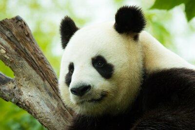Vinilo Panda dormido