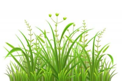 Vinilo Patrón de hierba verde sobre fondo blanco