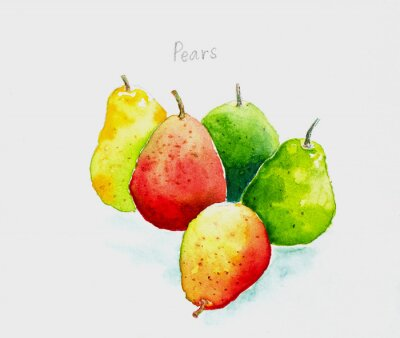 Vinilo pears'watercolor painted
