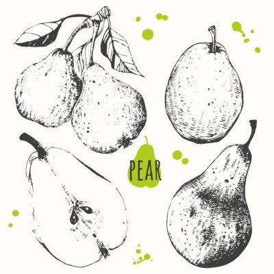Vinilo Pera. Conjunto de pera dibujada a mano. Comida orgánica fresca.