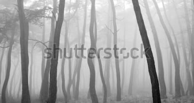 Vinilo Pino visto a través de la niebla