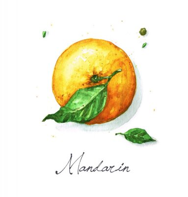 Vinilo Pintura de la acuarela de la comida - mandarín o naranja